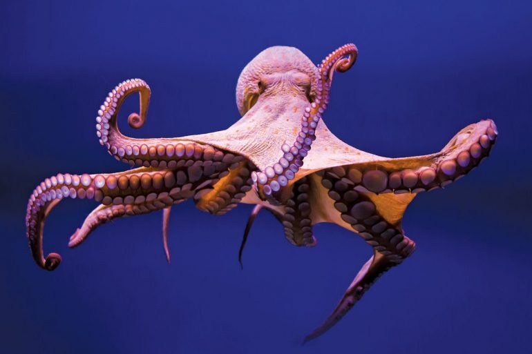 Weekend Round-Up: Smart Octopuses, A Lego Super Car, And Over-The-Top Sushi